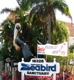 Learn about and observe sea birds at the Suncoast Seabird Sanctuary.