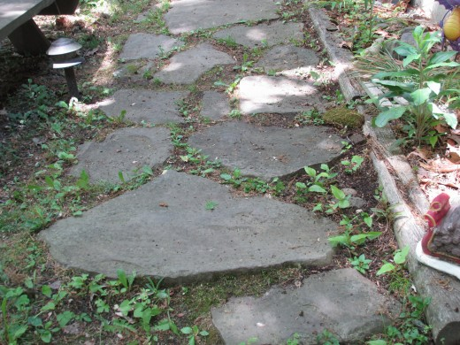 Stone pathway I made many years ago has stood the test of time.