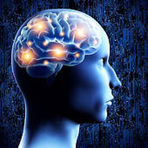 circuits inside the brain