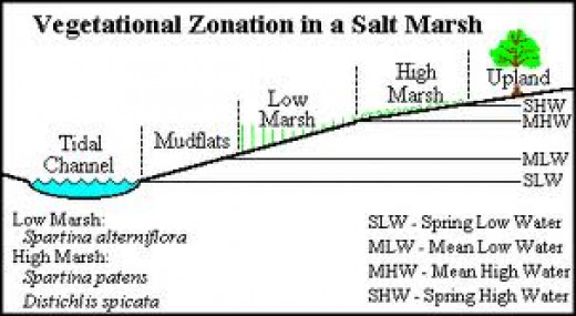 This is a salt marsh chart illustration.