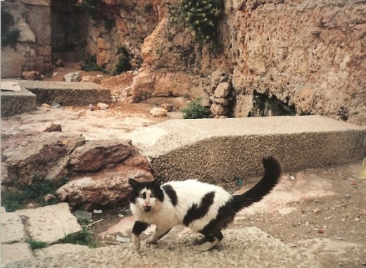 Israeli alley cats are amaizing,this one was a resident of a Jewish Quarter