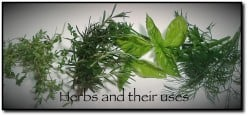List Of  Herbs