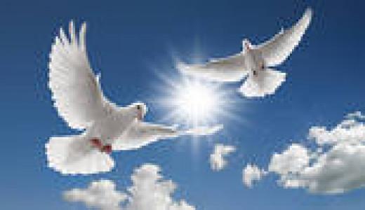 White doves heralding peace