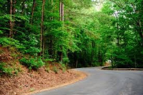 The road into the park has heavily wooded hiking and bicycle trails on either side of you.