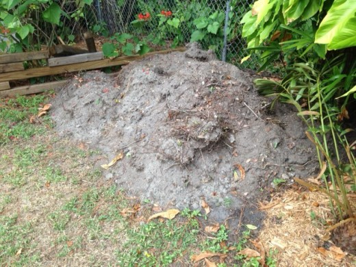 The hauled dirt, weeds and St. Augustine grass in the neighbor's back yard, three feet high.