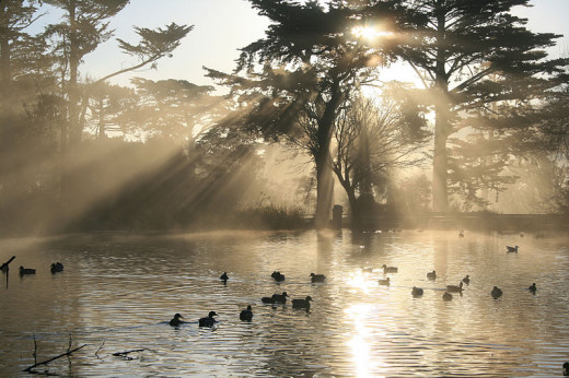 Crepuscular Rays. In the middle left of the image one could also see a different set of the rays coming upward from the lake. The light source for these rays is the Sun's reflection. Stow Lake, Golden Gate Park, San Francisco. Artist: Brocken Inaglo