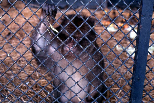 Monkey in cage - zoo