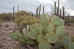 Tucson: Love Among the Cactus