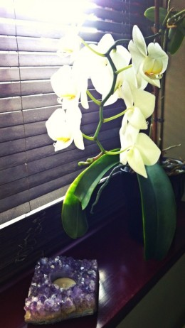 Orchids, make a quiet and relaxing space