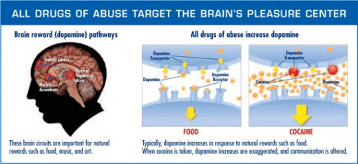 Drugs attack the pleasure center of our brain - Reward System