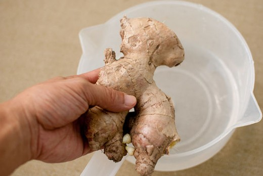 You can plant and grow the ginger roots you buy at the grocery store.
