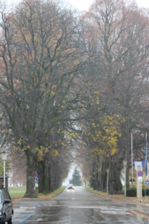 This is the avenue of trees where the children were spotted by their father playing in the trees. Maria was reprimanded for dressing the children in curtains.