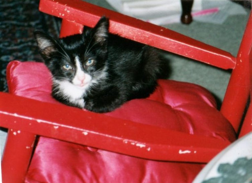 Little Kitty in red rocking chair. She was a sick kitten at the local animal shelter who grew into a healthy, fat cat. Her story is below.
