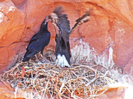 Cheering on the developing wing dance, as they begin thinking of venturing beyond their nest.