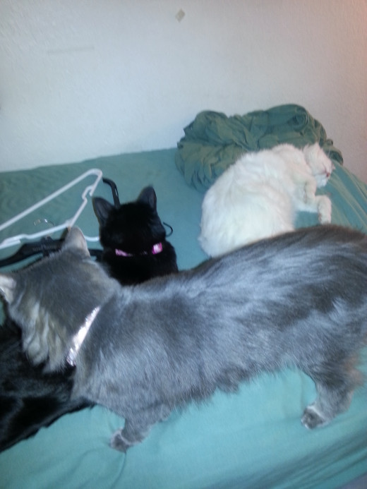 3 of my 4 cats!