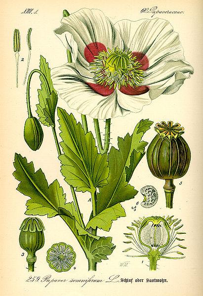 Dr. Thome's Flora Von Deutschland
