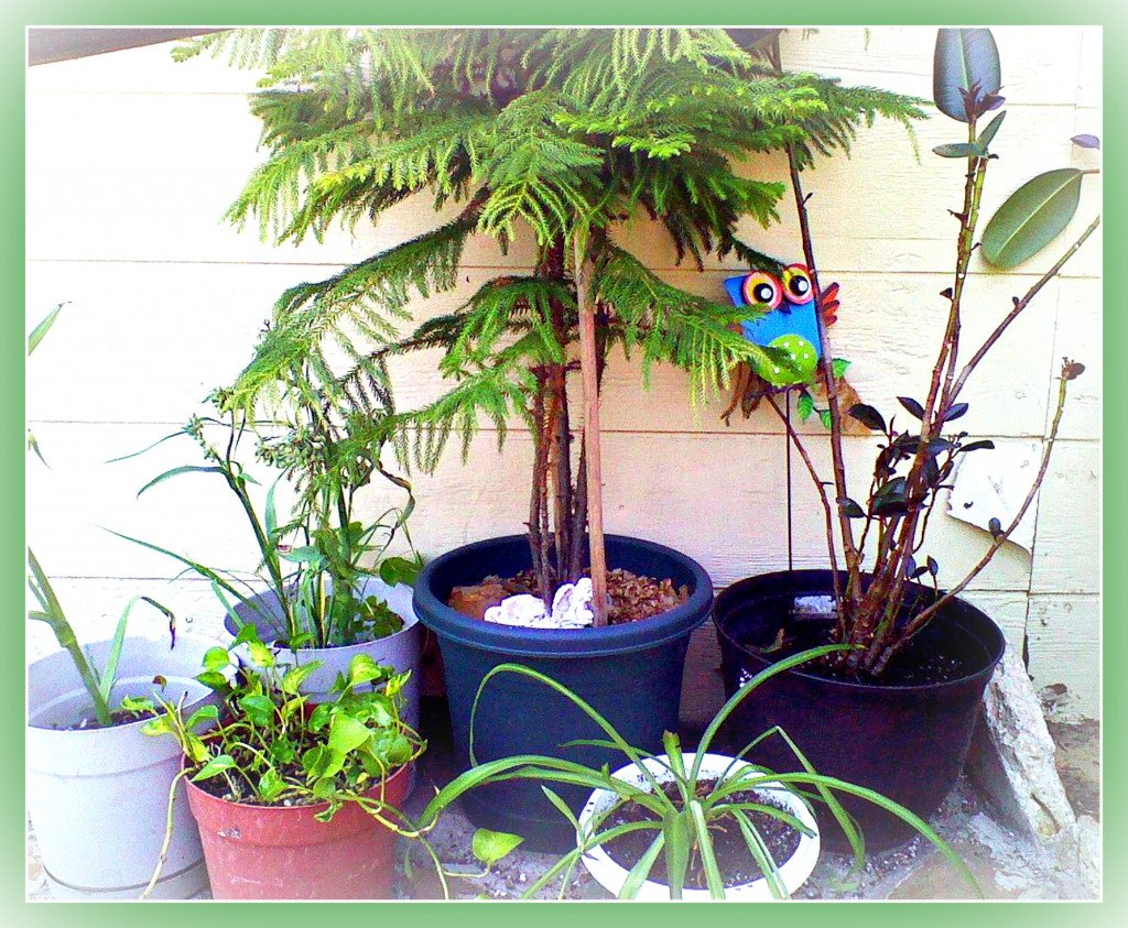 non toxic house plants for children cats and dogs