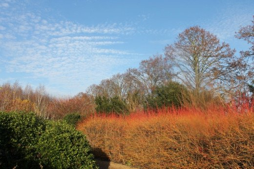 The winter garden, in early December, Anglesea Abbey.