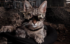 What is the cat wearing ,antique microscope binocular specticals