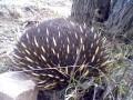 Looking for Australian native wildlife?