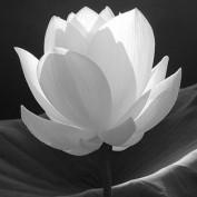 lotusletters profile image