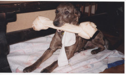 Dottie loved bones, toys, and socks.  She has both a bone, and a sock, in this picture.