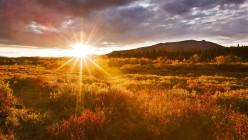 Dear Friend - Rays of Sunshine