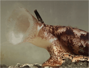 Cone Sea Shell