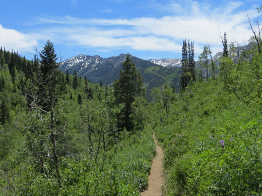 Trail to Dog Lake