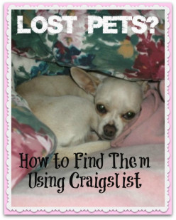 How to Find Lost Pets - Using Craigslist to Find Your Dog or Cat