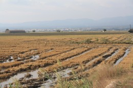 L'Ampolla, Spain - Birds on The Ricefields