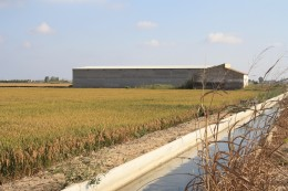 L'Ampolla, Spain - Ricefields, Irrigation System