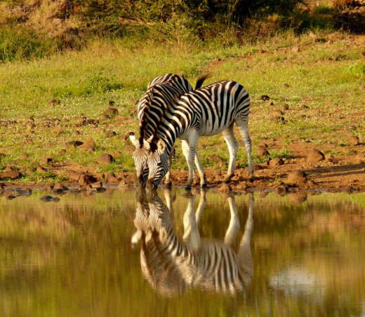 Waterhole at Mkuze Game Reserve