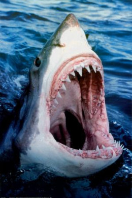 A Hungry Shark