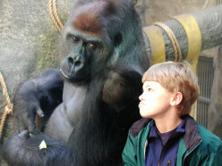 Atheists: When Men Act Like Gorillas You Have a Planet of Apes