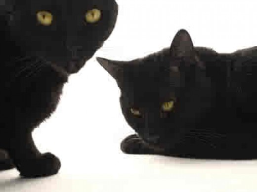 """A black cat went past us, and then I saw another that looked just like it,"" says Neo in ""The Matrix."" Trinity responds: ""A déjà vu is usually a glitch in the Matrix. It happens when they change something."""