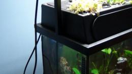 Aquaponic filter on a 20 gallon aquarium