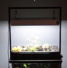 "An operating aquaponics filter on top of a 20 gallon (24"" x 12"") aquarium"