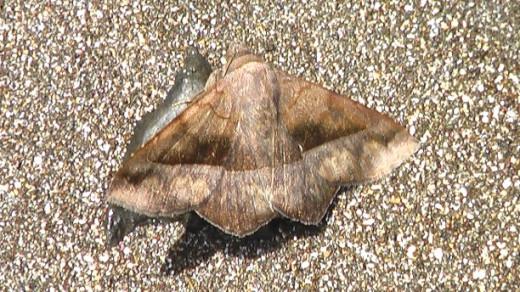 A moth on the beach.