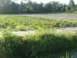 Local Central Florida Farm