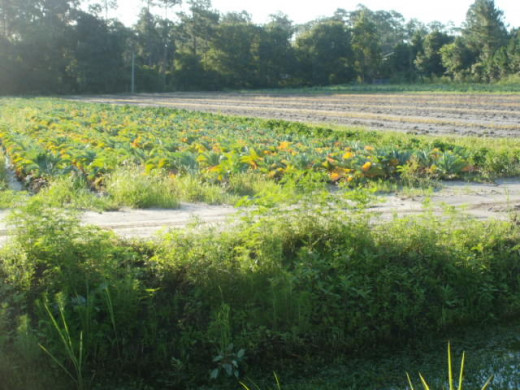 Local Central Florida Farm