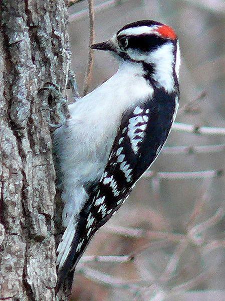 Hear the woodpecker's rhythm . . .