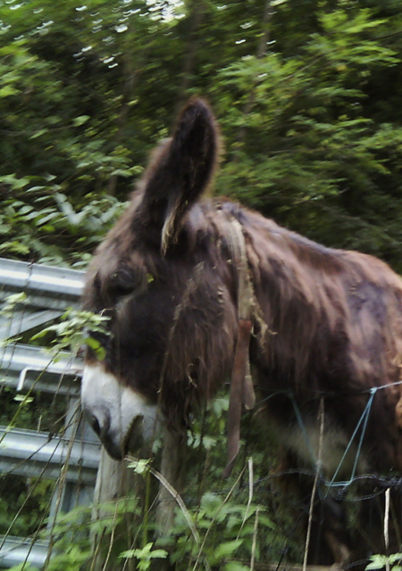 The friendly donkey who lives nearby