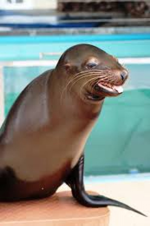 A Sea Lion show complete with tricks is performed everyday. They have two of these shows per day during the season.