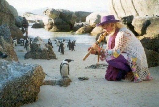 Bettine plays to Penguins. Photo Credit: joyofmusic.com