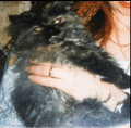 Mourning my Cat: In Memory of Miccola, my Beloved Persian Cat