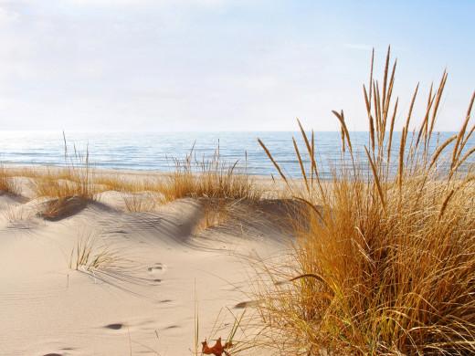 Golden beach grass of winter (January 2012)  an unusually mild winter