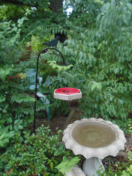 Bird bath in back yard
