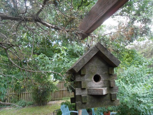 Bird house under the pines