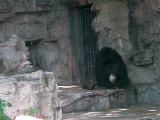 depressed bear